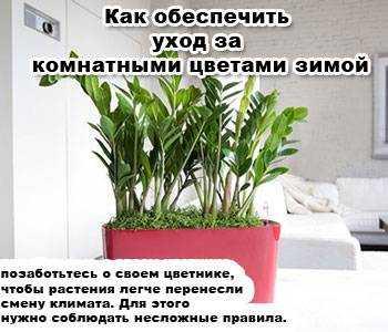 Как ухаживать комнатными цветами